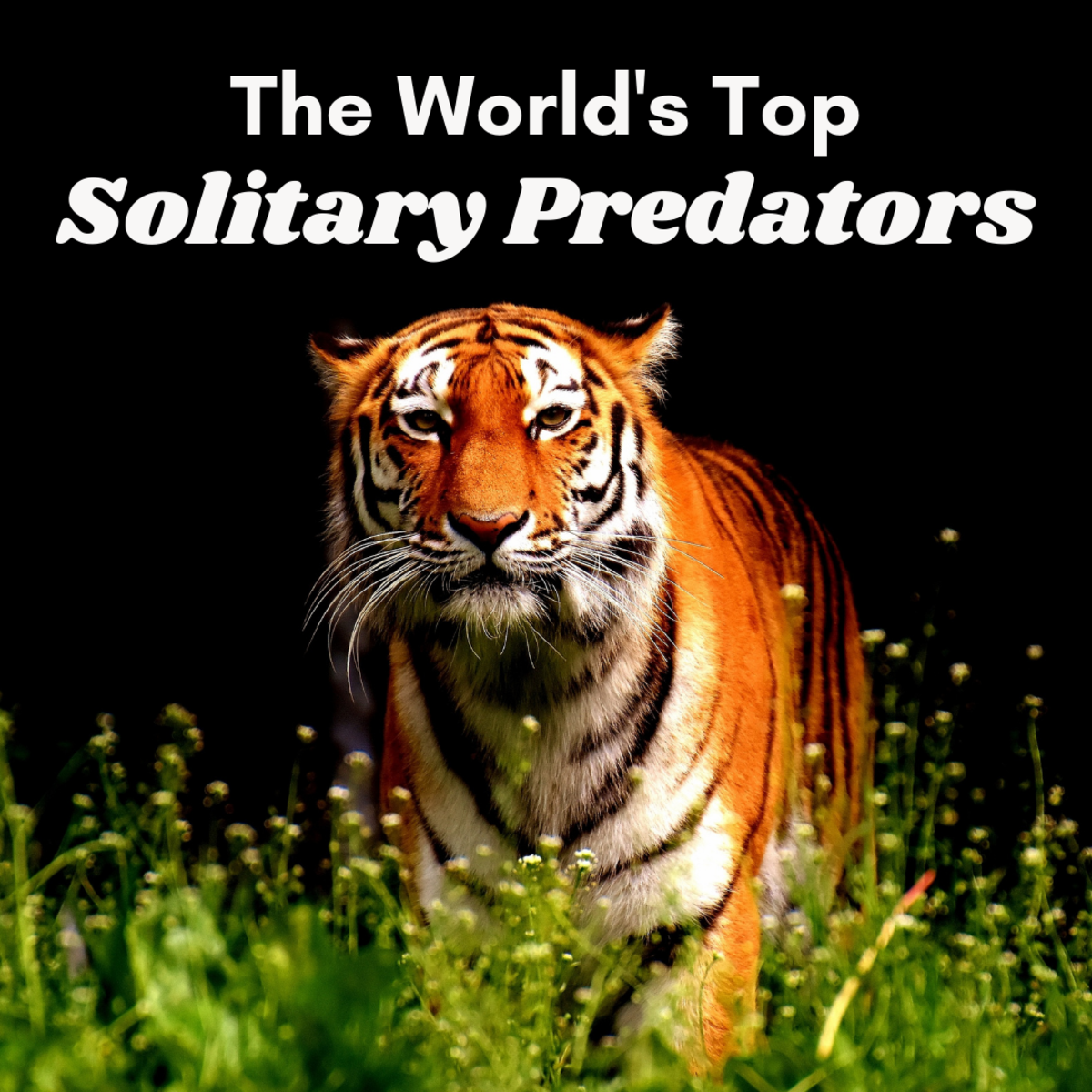 These five solitary hunters are terrifying predators that you wouldn't want to find yourself alone with! Read on to find out the scientific names and a few cool facts about each.