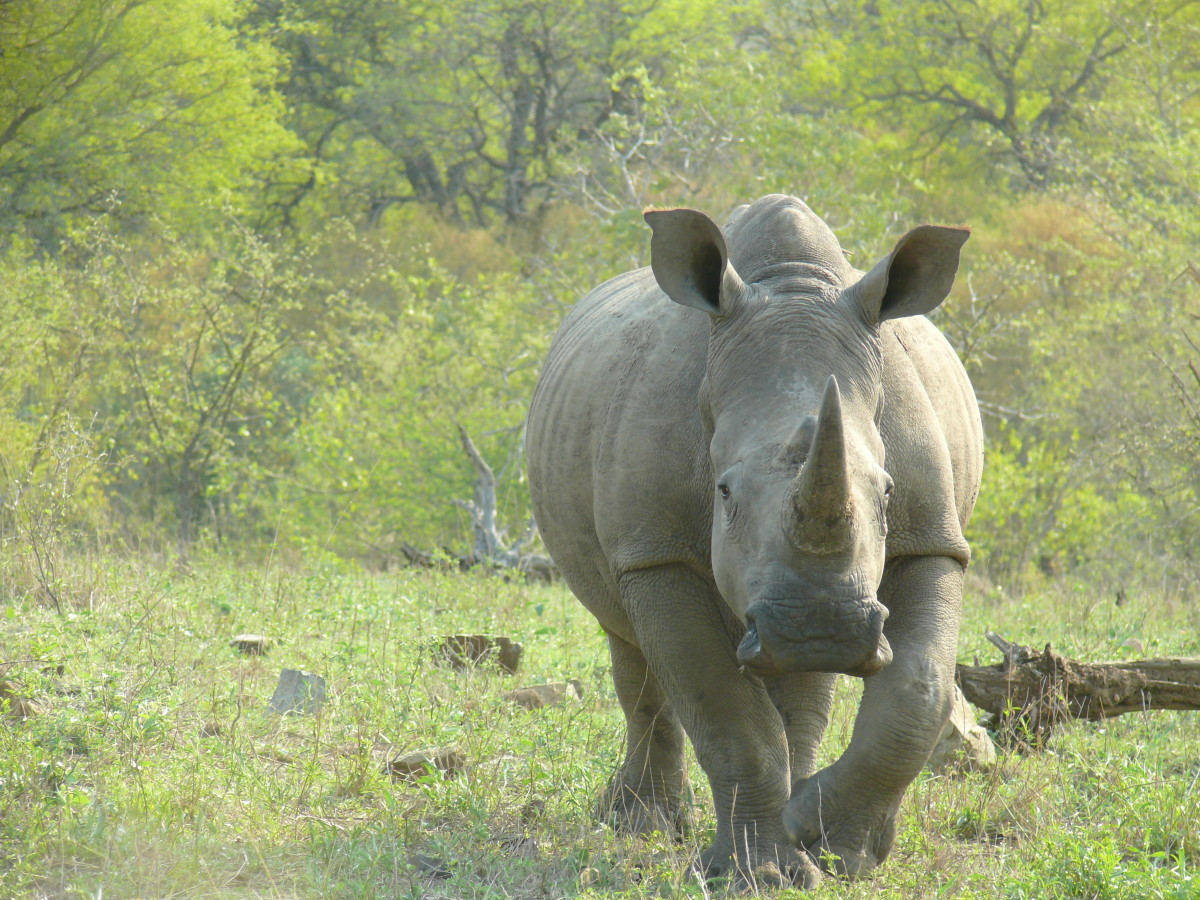 Another of the Big Five