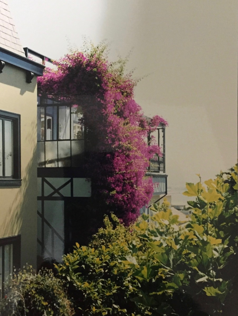 This is the first bougainvillea I ever saw. It was growing on a balcony, set against an ominous looking sky in San Francisco.