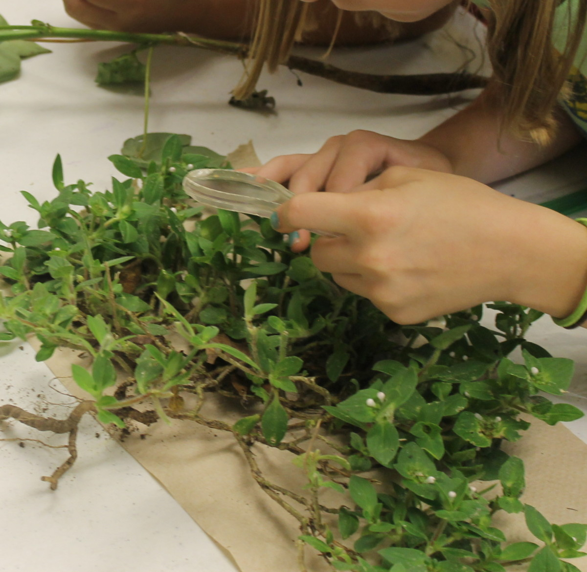 Observing Stems