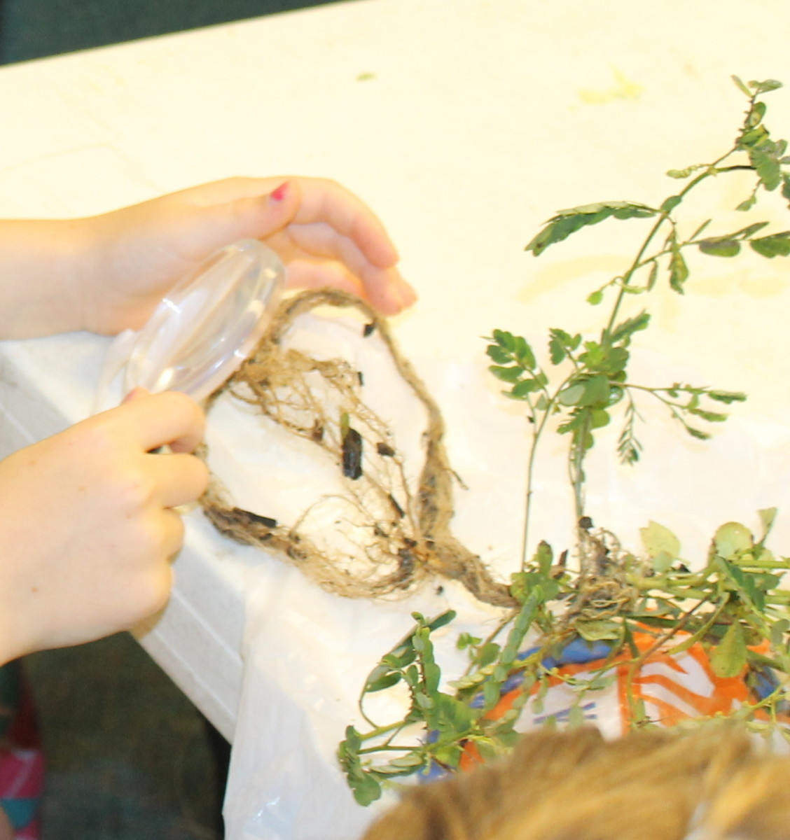 Observing various types of roots