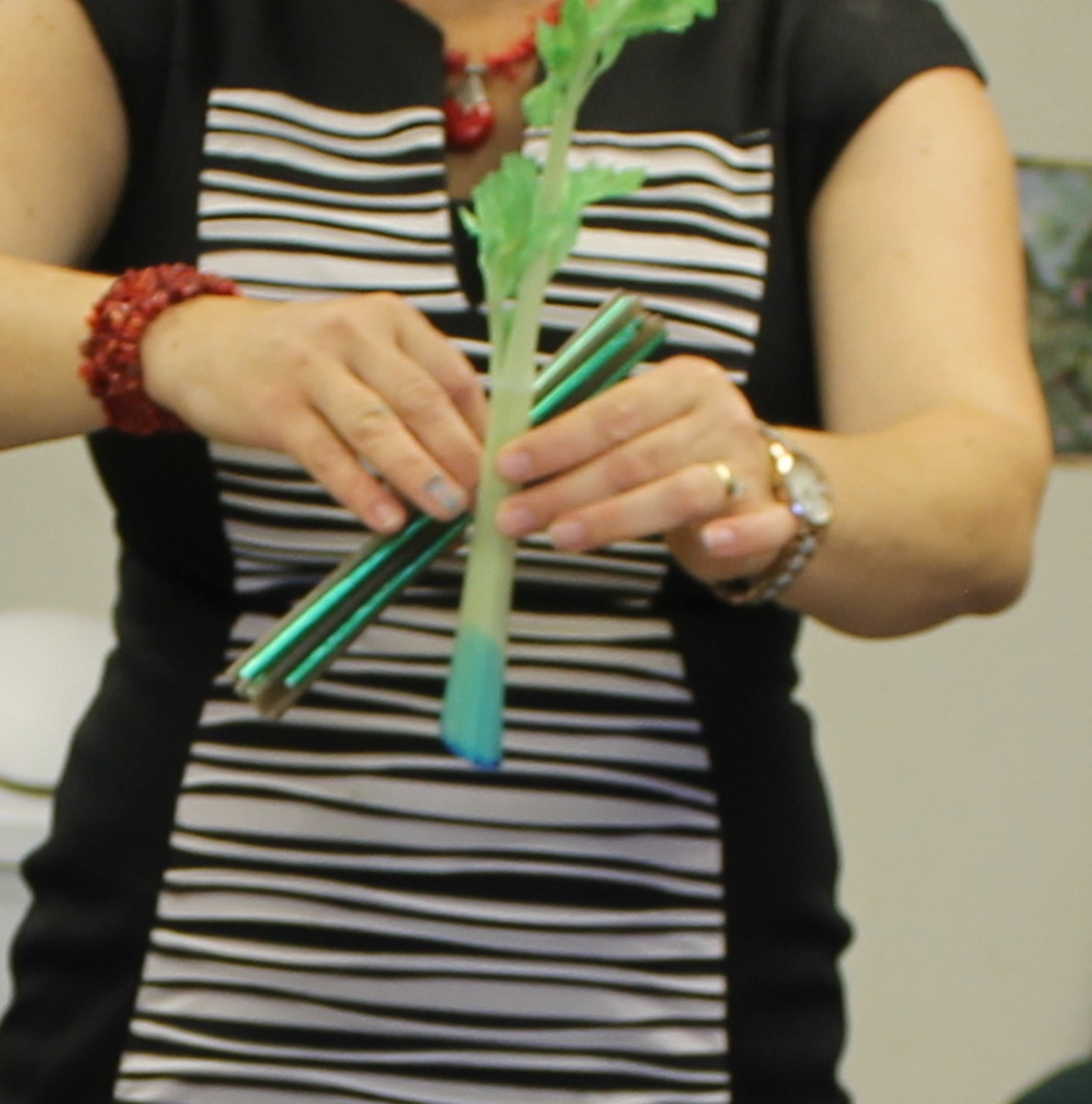 Using a bundle of straws to talk about the vascular system of a plant
