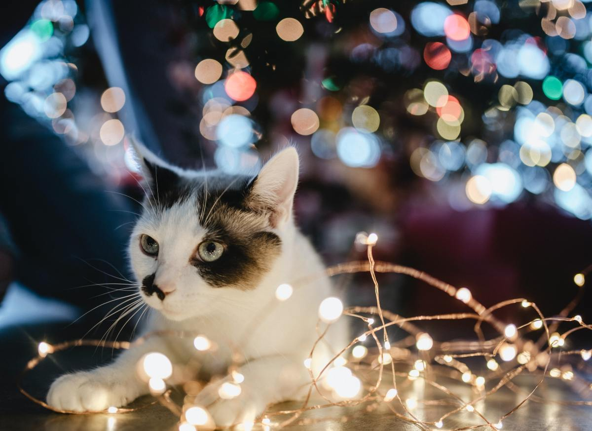 how-to-keep-a-cat-out-of-a-christmas-tree