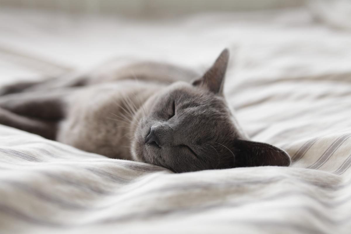 3 Habits for Good Sleep