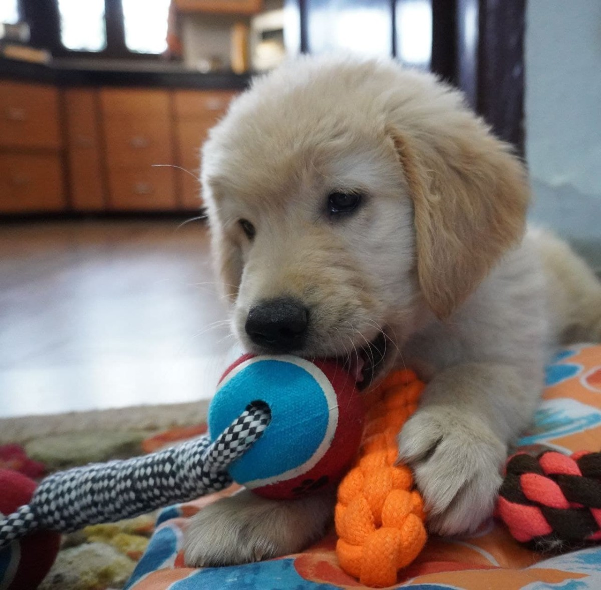 Austin playing with his toy