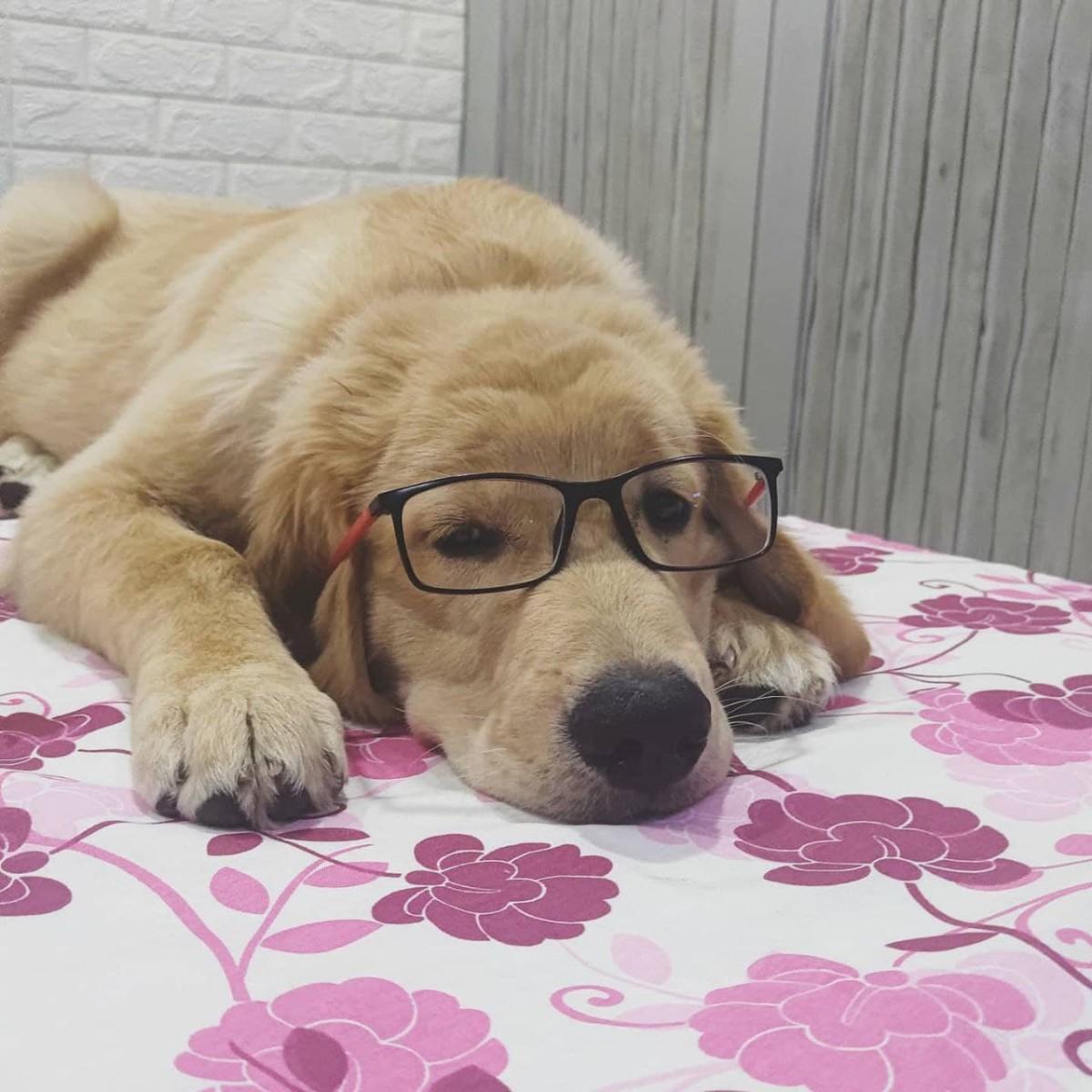 Austin wearing Glasses