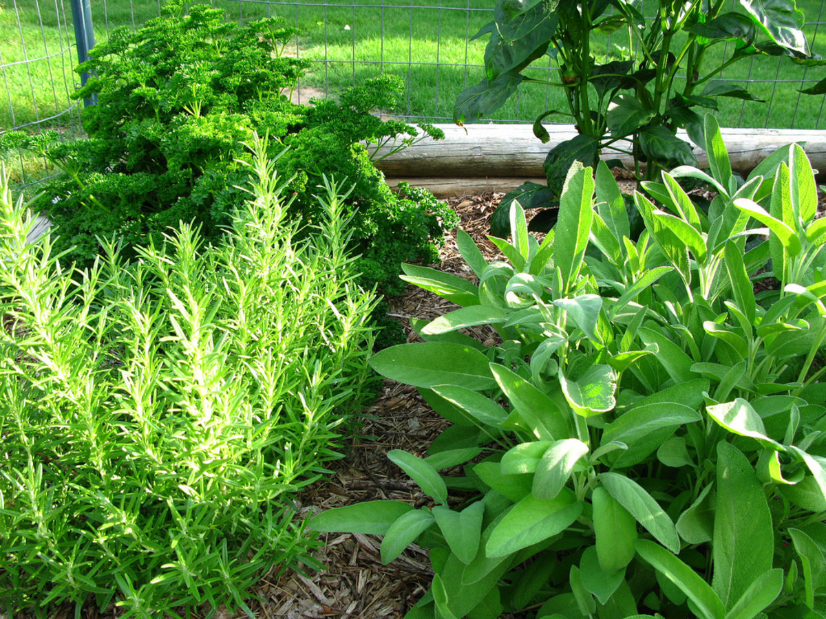 Delicious herbs from your own garden