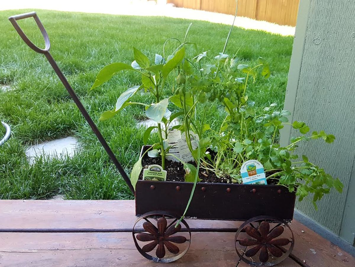 Our own little herb garden at home!