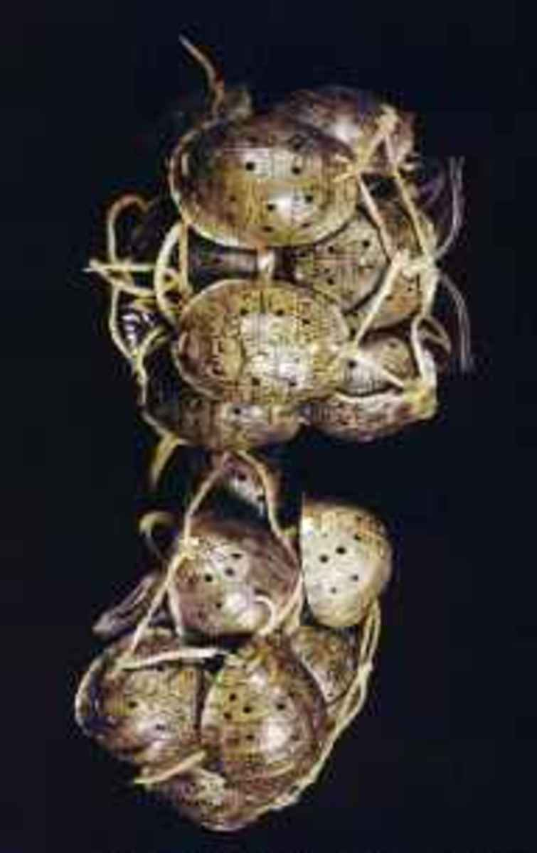 Turtle shell leg rattles worn by the Shell Shakers