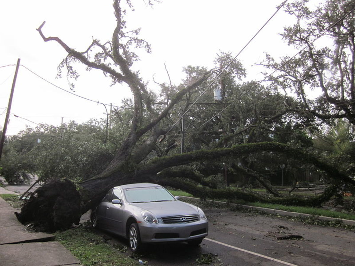 """Hurricane Isaac deposited this tree on this car.  Image courtesy """"infrogmation"""" and Wikimedia Commons."""