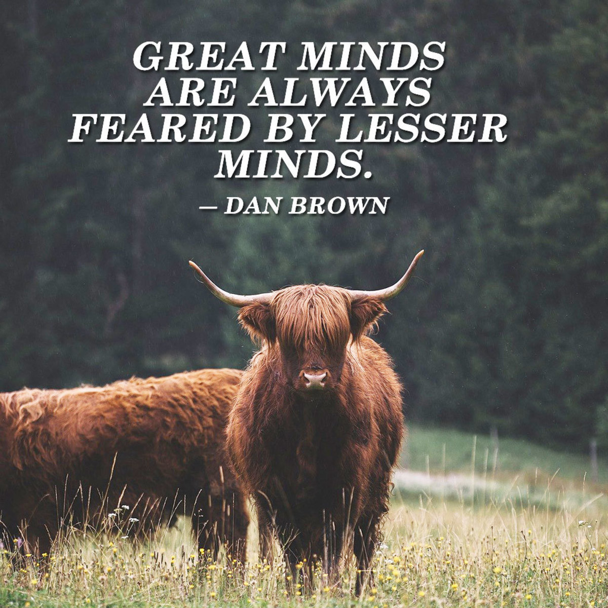 """""""Great minds are always feared by lesser minds."""" ― Dan Brown"""