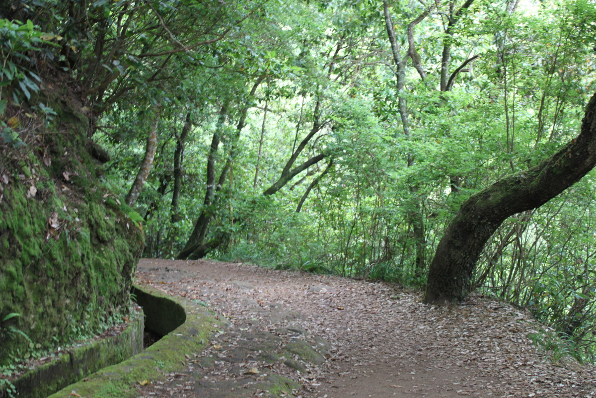 A walk in the woods, a lush green central area of the Island