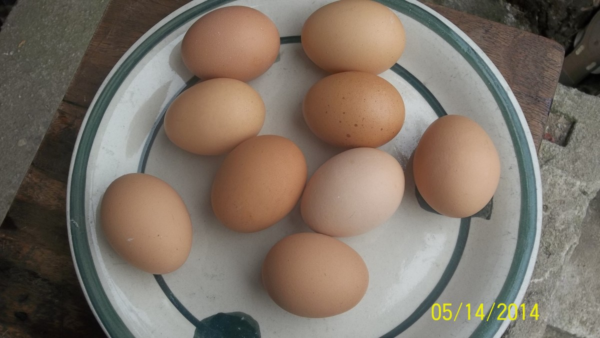 Egg-white contain all the protein requirement of the body