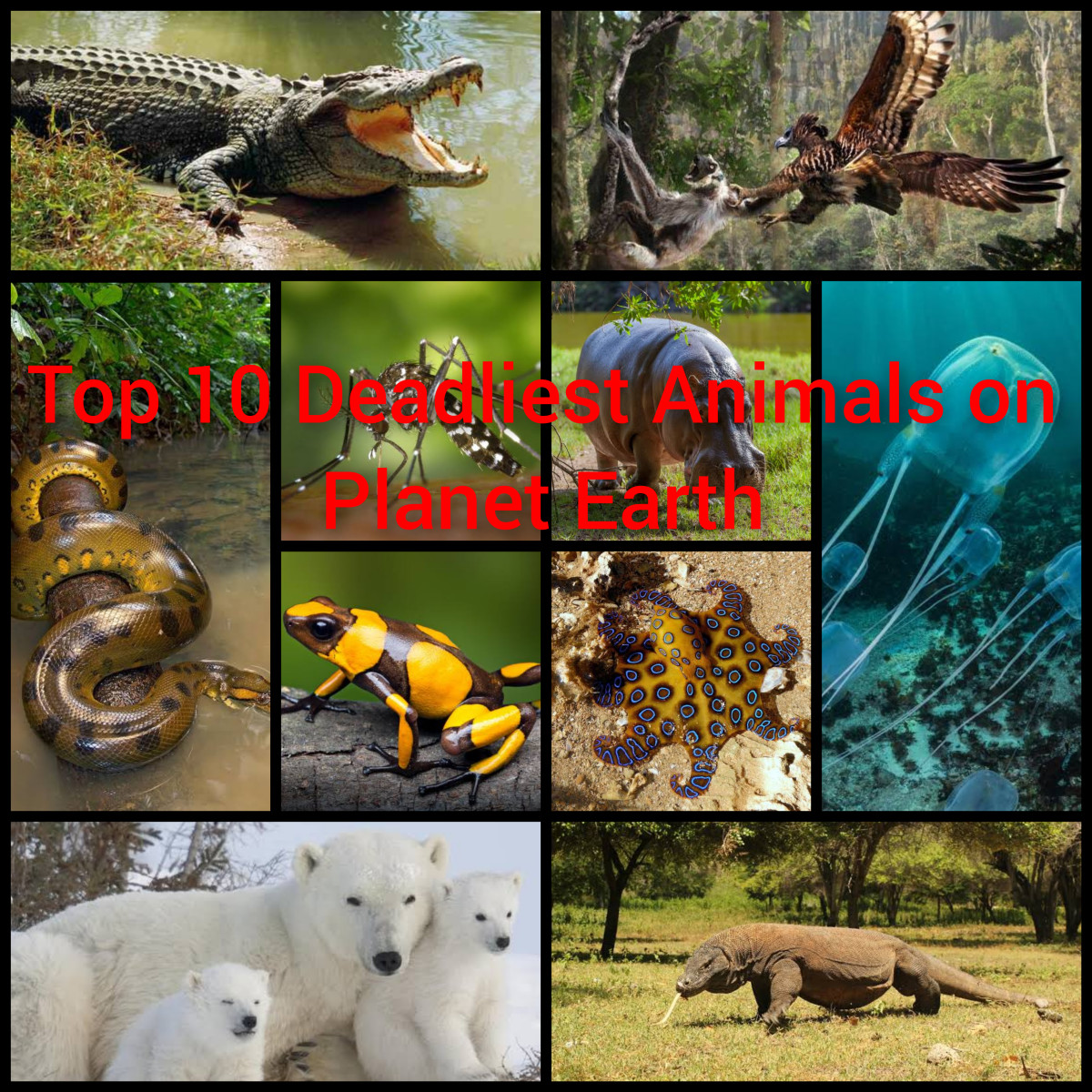 Top 10 deadliest animals on planet Earth.