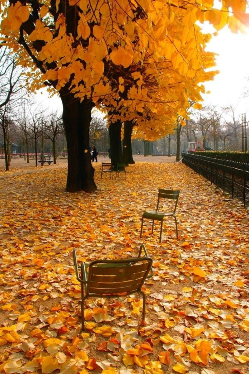 the-season-of-endings-and-conclusion-autumn