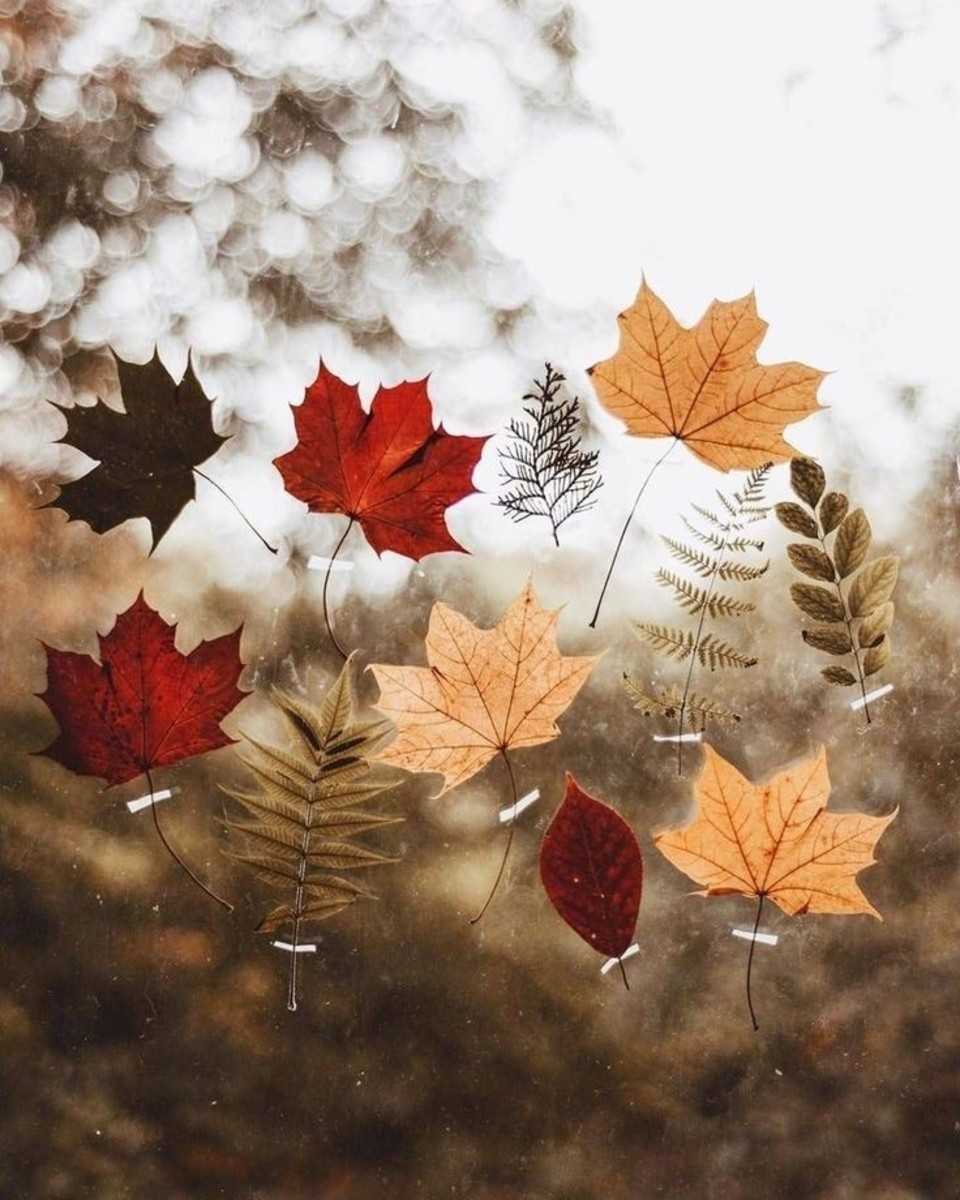The Season of Endings and Conclusion: Autumn