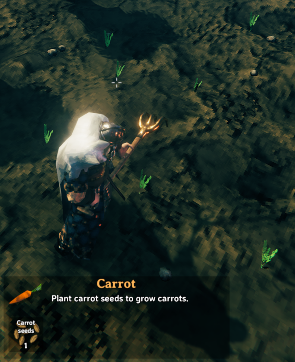 Planted carrots.