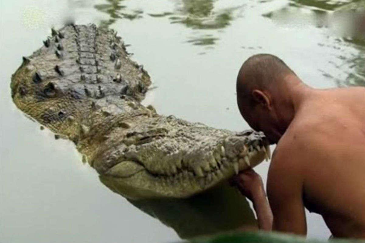 Meet Babiya, the Only Vegetarian Crocodile in the World