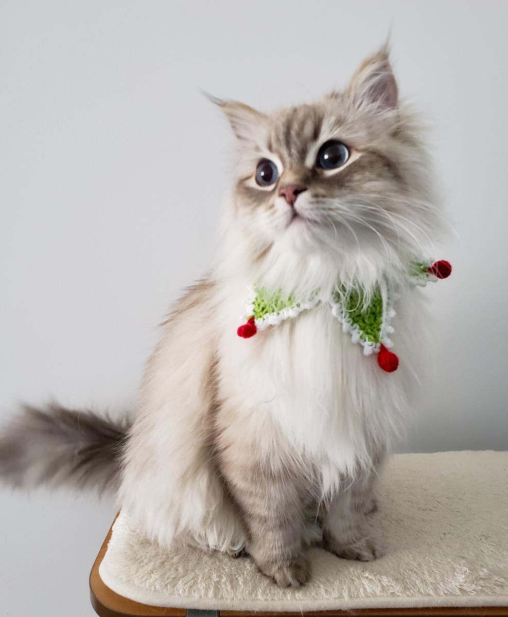 how-to-make-christmas-safe-for-your-cat