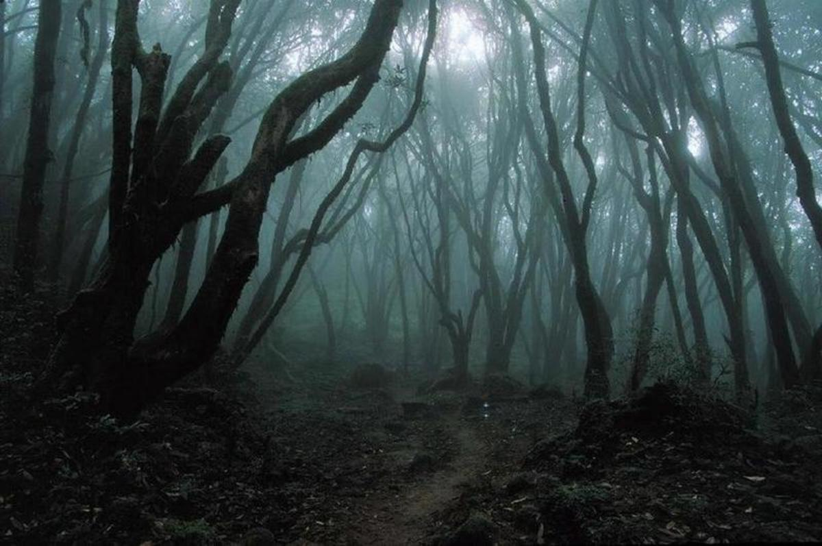 """""""e dirty gray flakes were falling from the darkened sky covering the blackened earth and the dead and barren trees."""""""