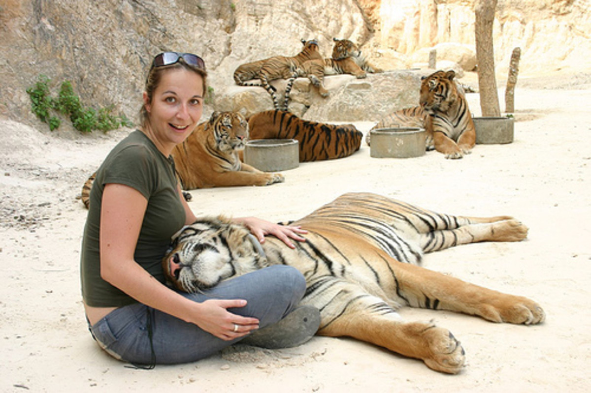 The Tiger Temple in Kanchanaburi Thailand