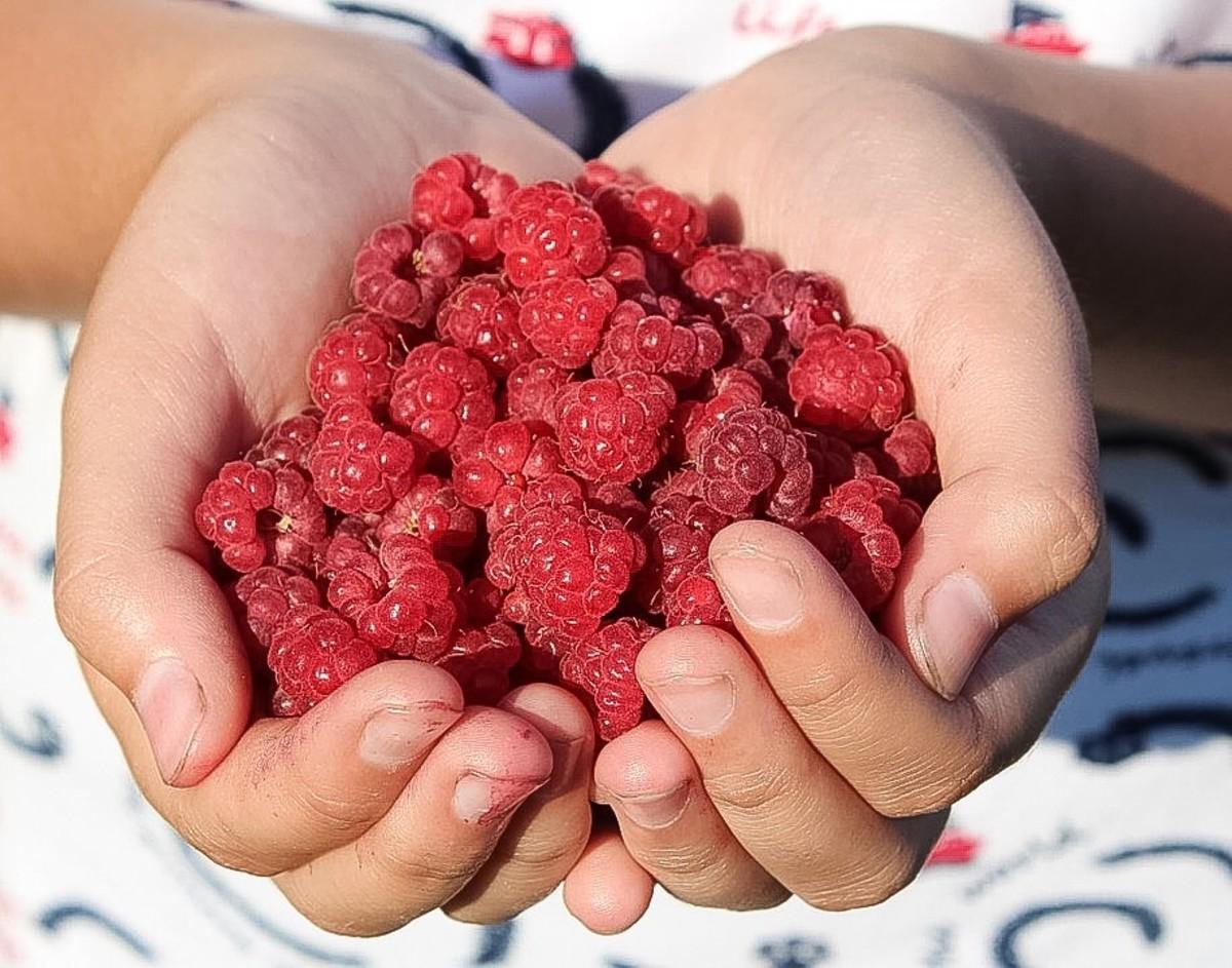 Berries like raspberries are rich in anti-aging nutrients.