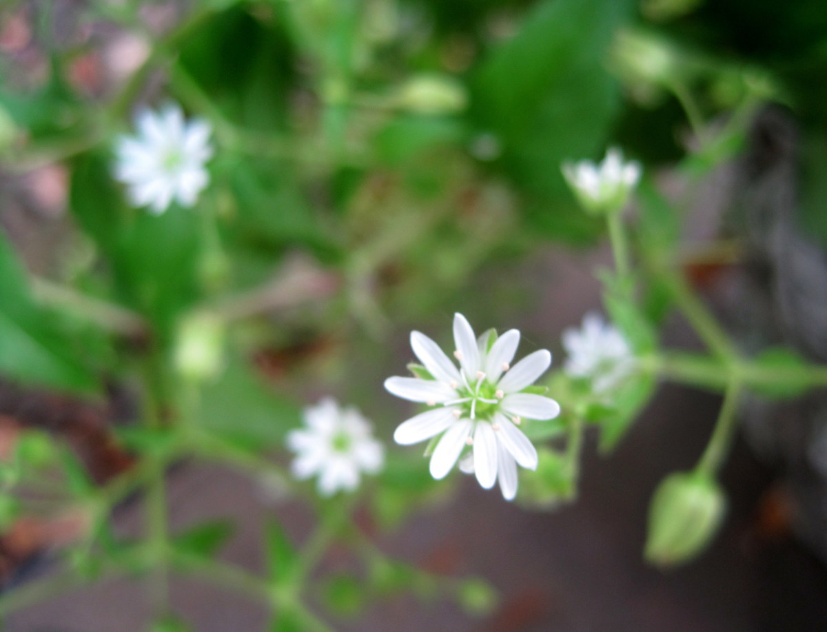 Using the macro setting on your camera will allow you to get this type of focus.