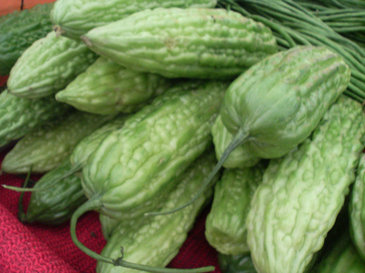 Whole Bitter Melon or Ampalaya Fruits (Photo Credit: roland / flickr)