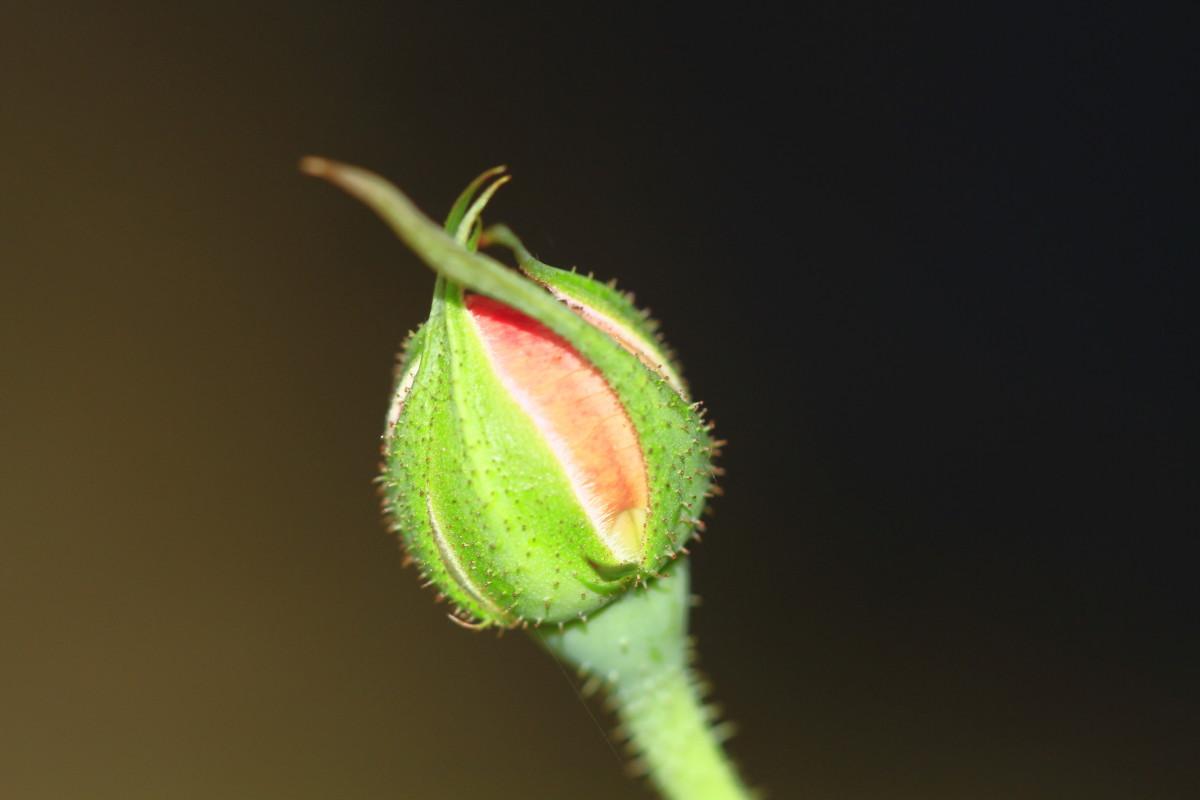 A Short Poem; Love Blossom: A Haiku Poem
