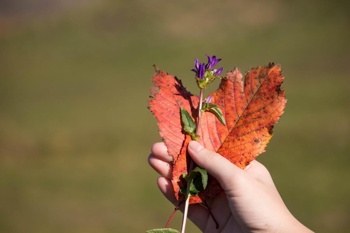 heart-shape-autumn-leaves