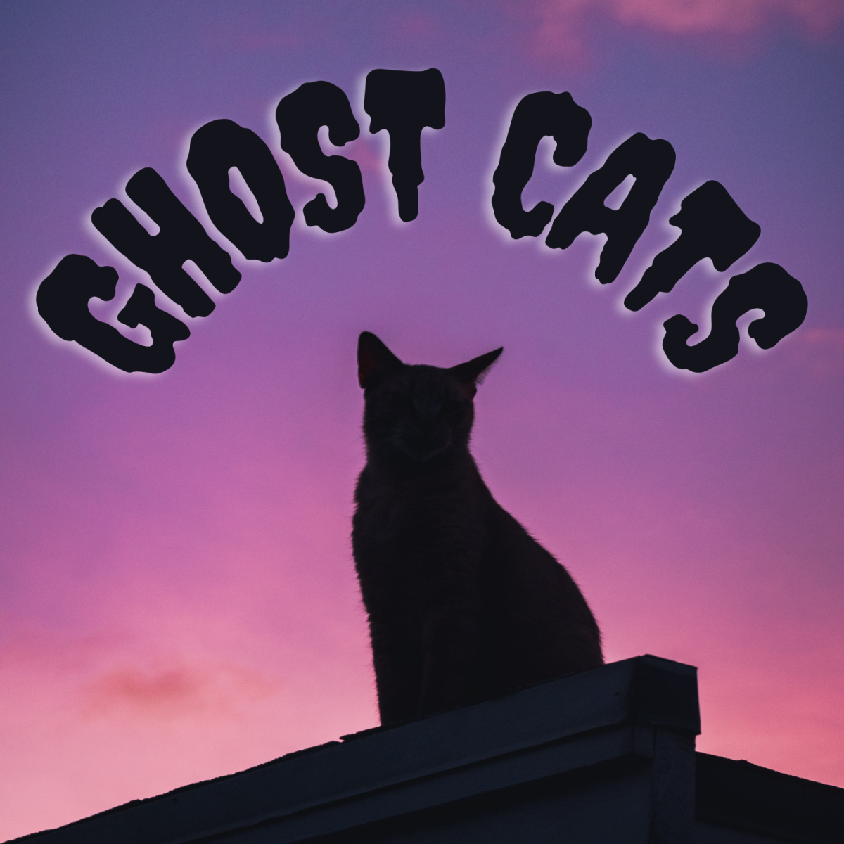 Two chilling stories of real-life encounters with ghost cats.