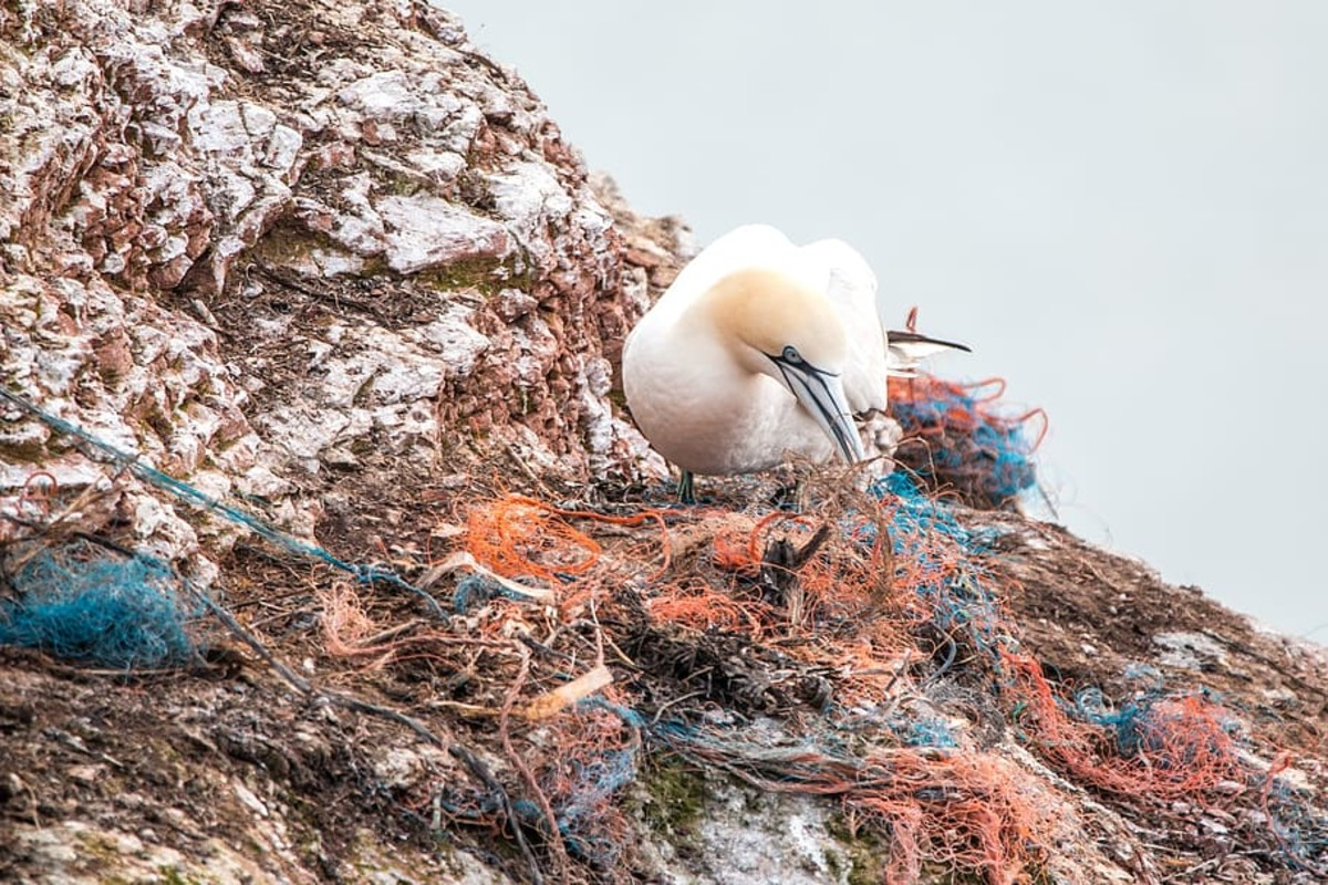 Heaps of marine plastic waste accumulate in oceans, disrupting ecological life.