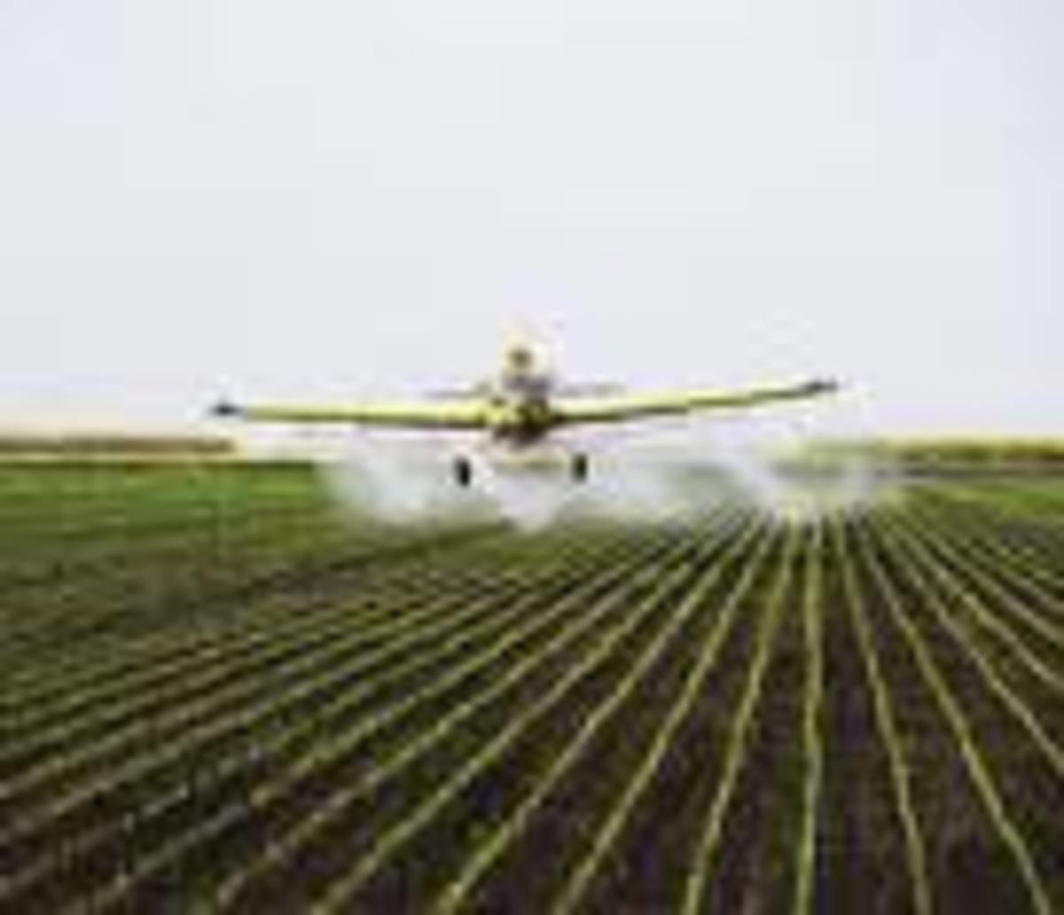 Poison sprayed from the air drifts away from crops on wind