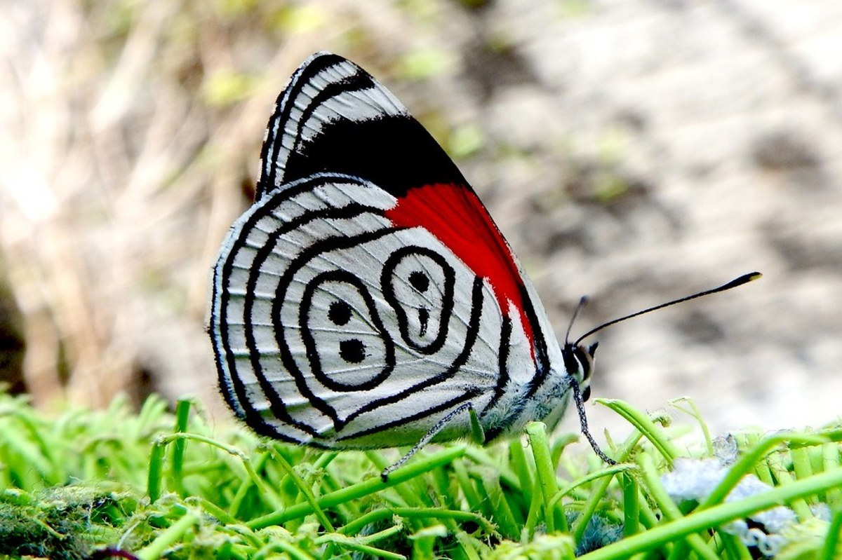 8-most-beautiful-butterflies-in-the-world