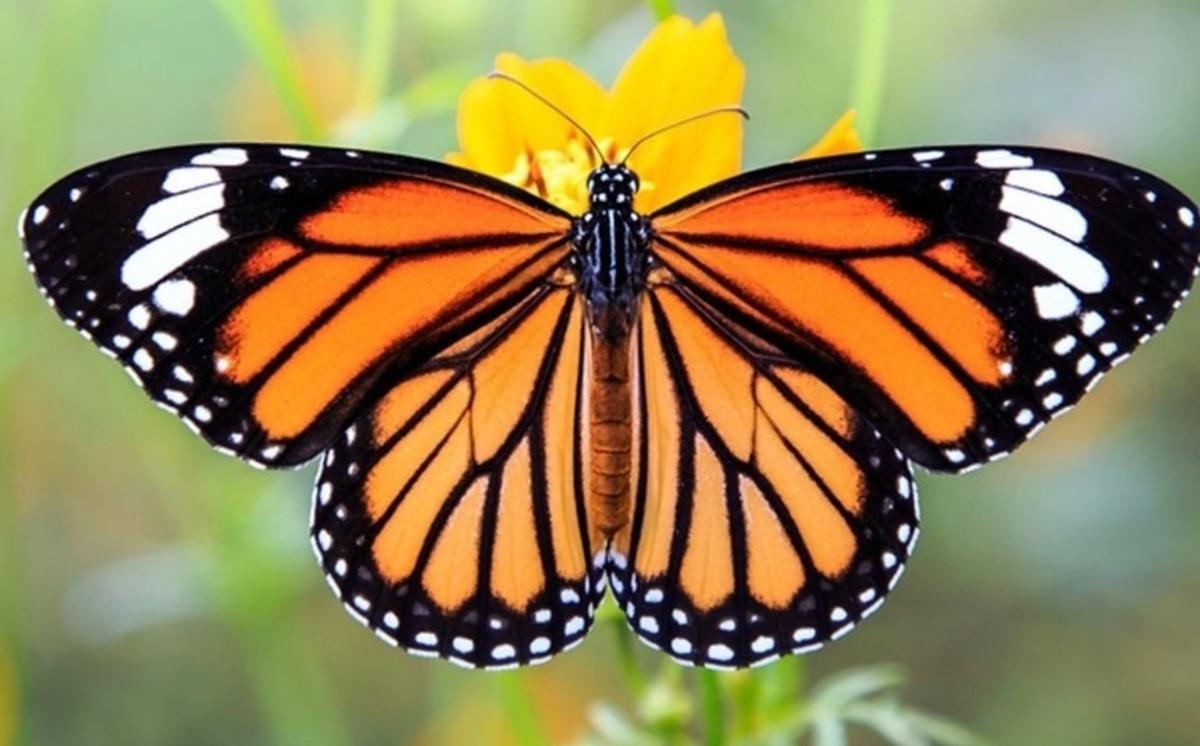8 Most Beautiful Butterflies in the World! Stunning Natural Beauties!