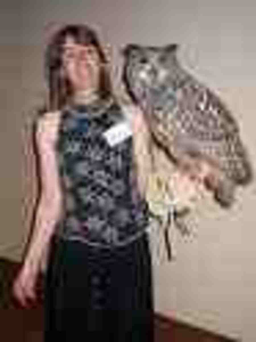 Eagle Owl.  Often said to be world's largest owl with a five-foot wingspan (The Blakinson's Owl is slightly larger).