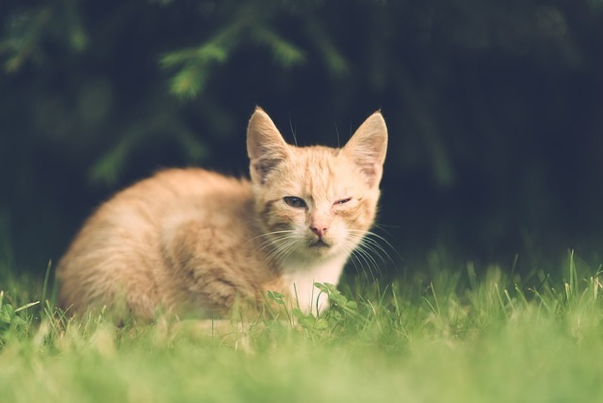 signs-your-cat-needs-help