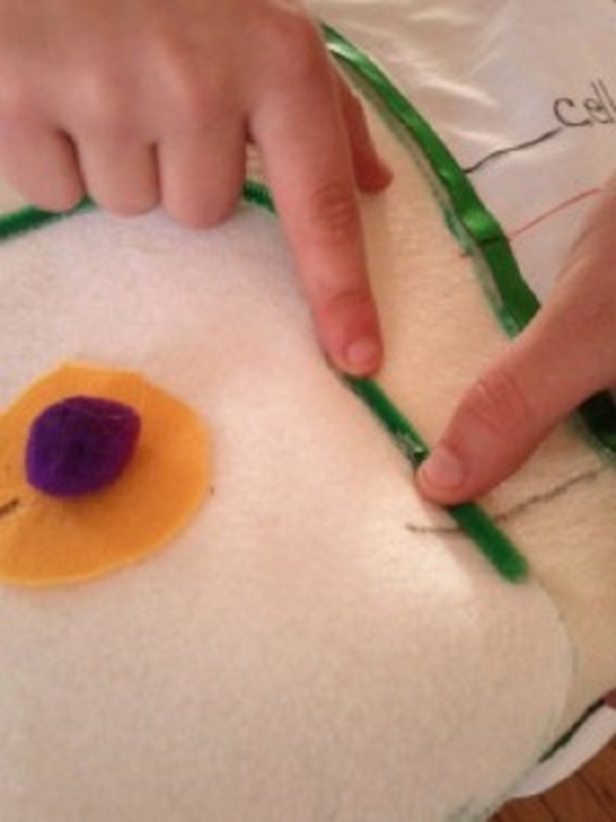 Attach the cell and central vacuole to the front of the t-shirt using fabric glue