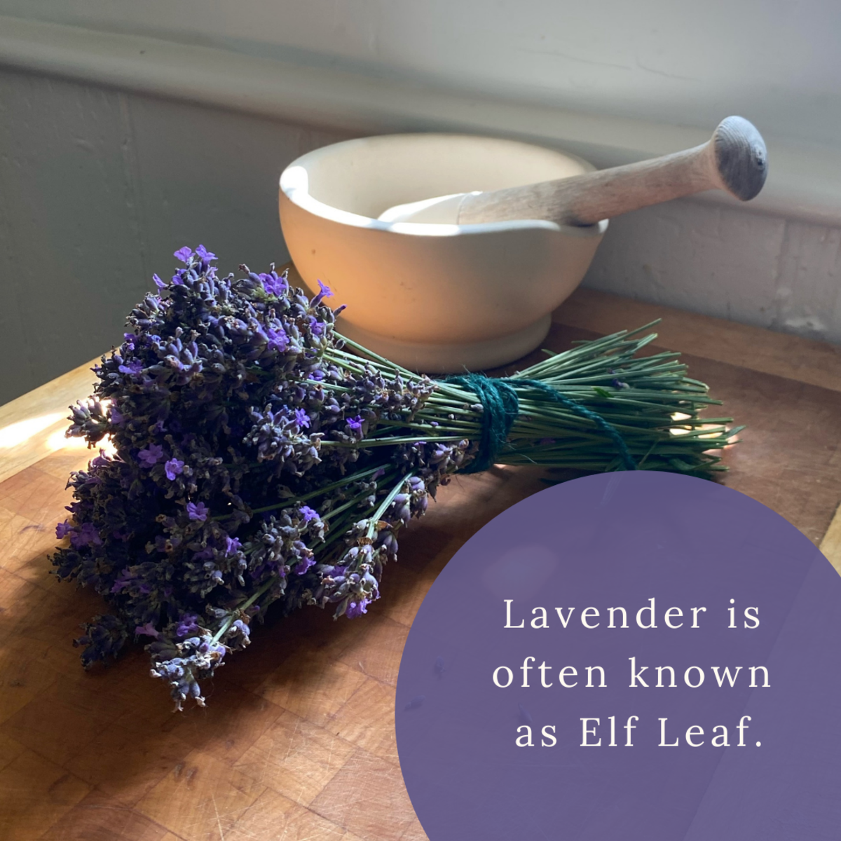 Did you know that lavender has a magical code name?