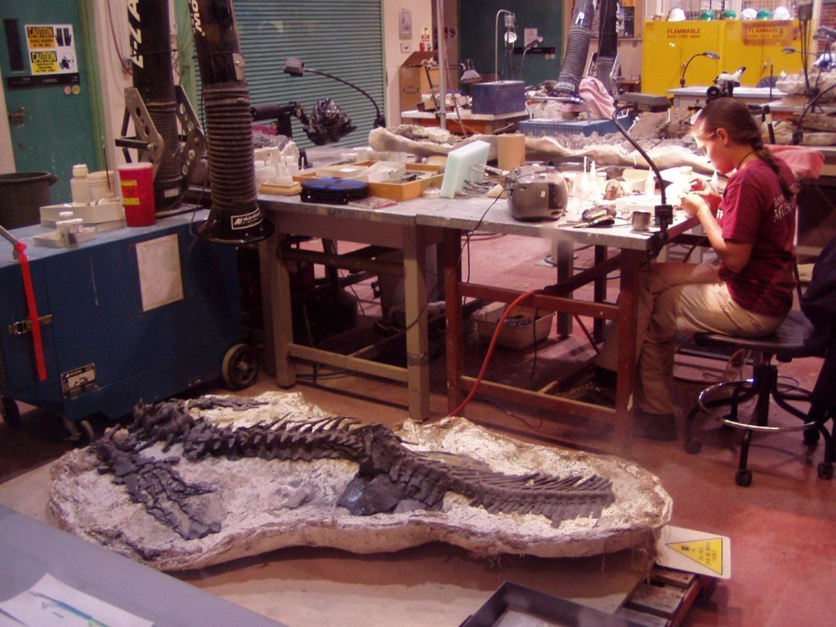 A lab where fossils are prepared and studied
