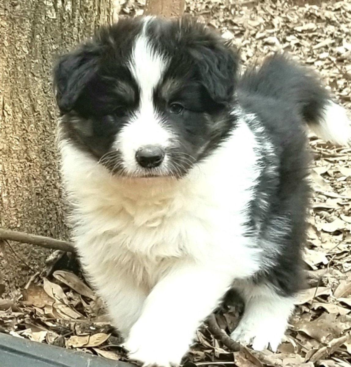 """""""Renegade"""" Puppy names that start with R"""