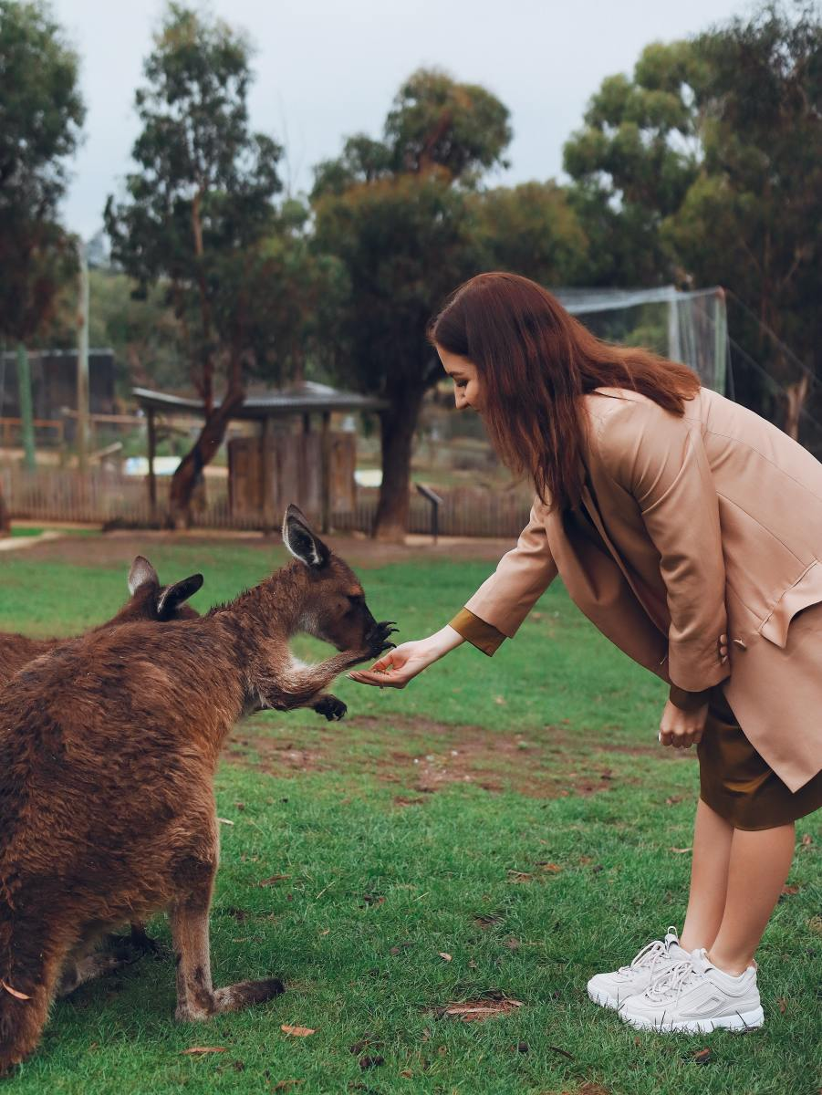 This Lovely Creature Is More Than Humans In Australia - Kangaroo Surpasses Australia's Population and its Wildlife