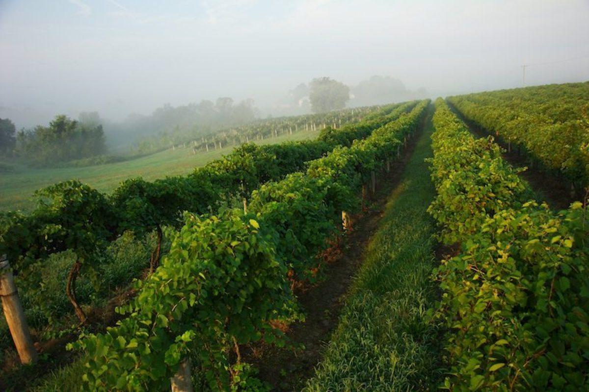 jason-arnolds-list-of-missouris-best-wineries