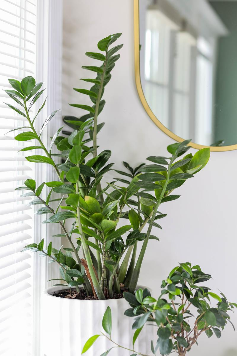 A Short Guide on Integrating Indoor Plants in Your Interior Design