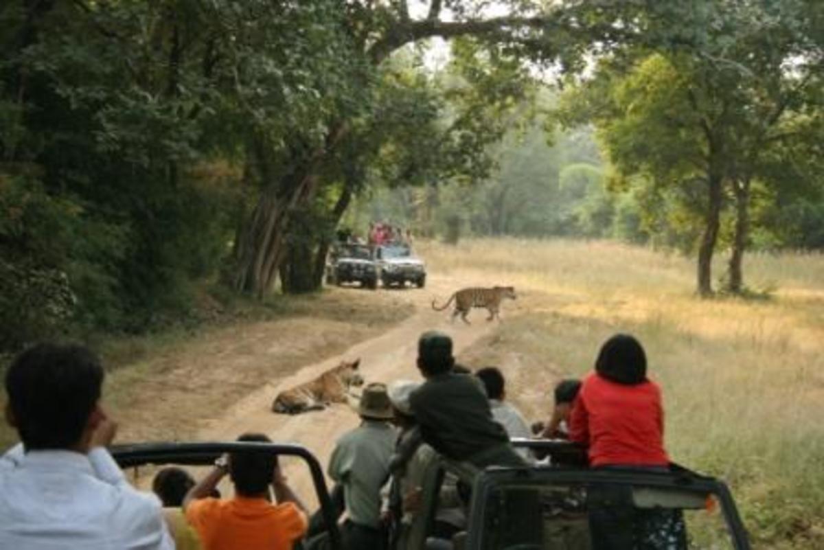 Open Jeep Safari in Jungle