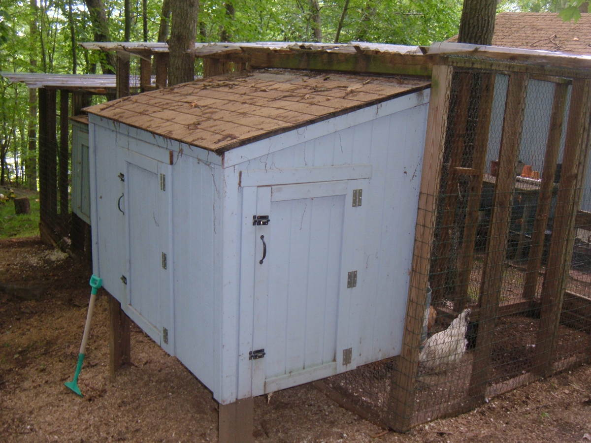 Our small, elevated Chicken Coop