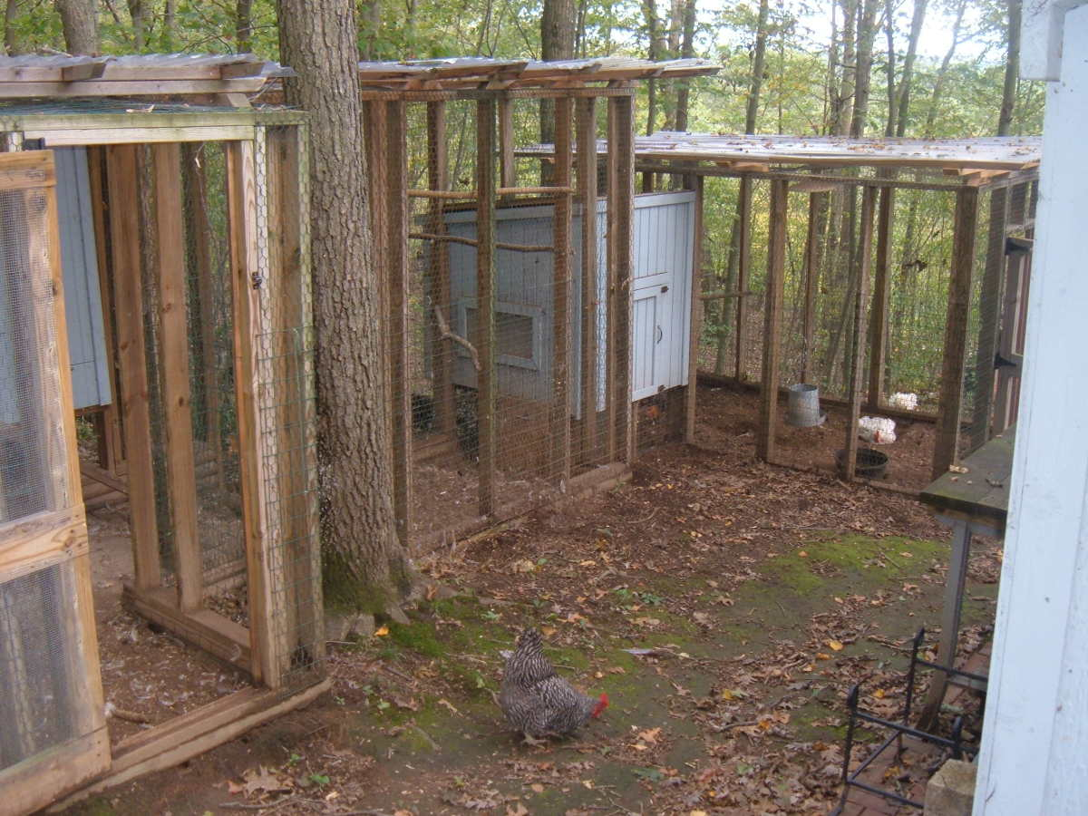 planning-for-a-small-chicken-coop