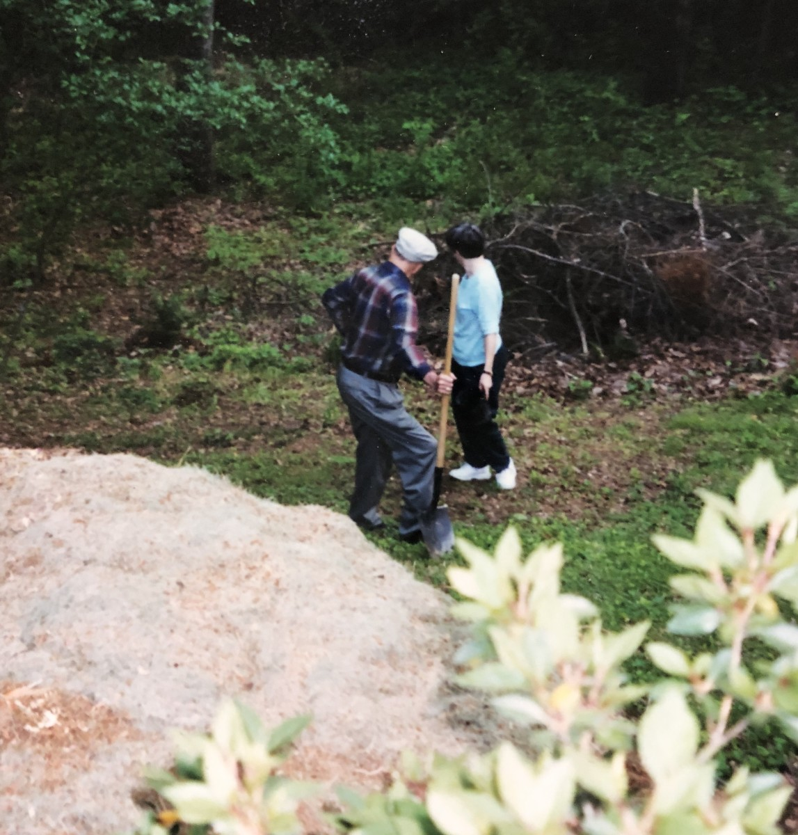 Dad and me preparing to dig a planting hole for one of his many azaleas.