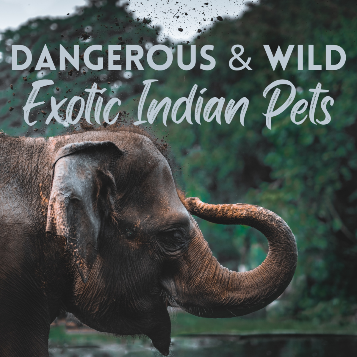 What are the most fascinating wild animals kept as pets in India?