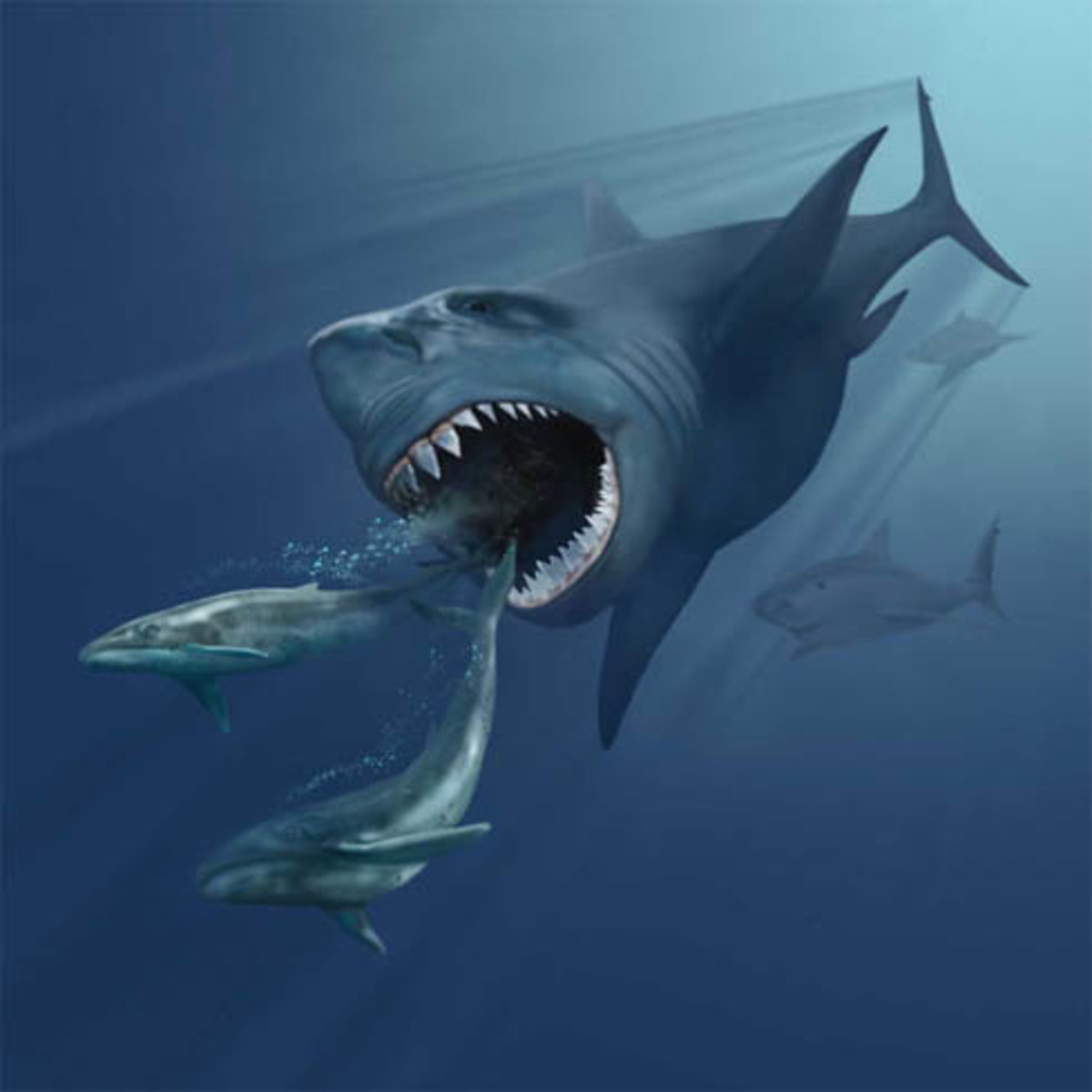 A depiction of Megalodon hunting two Eobalaenoptera whales.